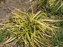 Planta verde e seca de um jardim da cidade foto de stock royalty free