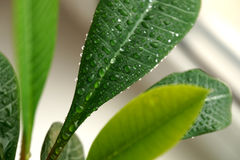 Planta verde em uma janela Foto de Stock Royalty Free