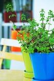 Planta verde en crisol Fotos de archivo libres de regalías