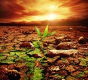 Planta verde en desierto fotografía de archivo
