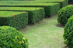 Planta verde en el jardín Imagen de archivo