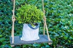 Planta verde en el oscilación Imagenes de archivo