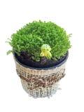 Planta verde en el pote fotografía de archivo