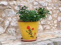 Planta verde en el pote amarillo brillante, Grecia Imágenes de archivo libres de regalías