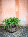 Planta verde en exterior de adornamiento de la casa del pote de madera Imagen de archivo