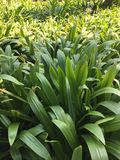 Planta verde en granja Imágenes de archivo libres de regalías