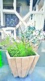 Planta verde en hogar imagen de archivo