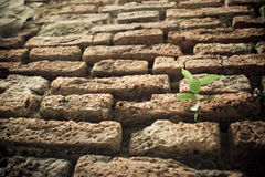 Planta verde en la acera del ladrillo Foto de archivo libre de regalías
