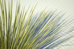 Planta verde en la duna de arena blanca Foto de archivo