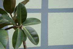 Planta verde en la pared fotografía de archivo