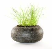 Planta verde en la piedra negra Foto de archivo libre de regalías