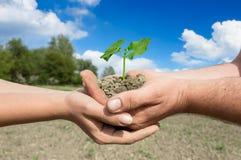 Planta verde en las dos manos de los pares Fotos de archivo