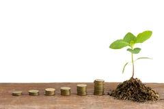 Planta verde en las monedas de oro Foto de archivo libre de regalías