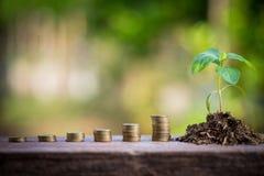 Planta verde en las monedas de oro Fotos de archivo libres de regalías