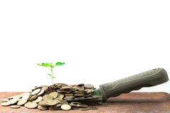 Planta verde en las monedas de oro Imágenes de archivo libres de regalías