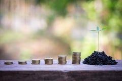 Planta verde en las monedas de oro Fotografía de archivo