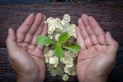 Planta verde en las monedas de oro Imagen de archivo libre de regalías