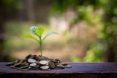 Planta verde en las monedas de oro Imagen de archivo
