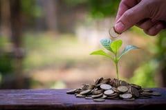 Planta verde en las monedas de oro Fotos de archivo
