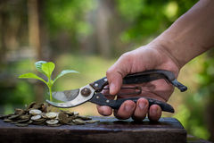 Planta verde en las monedas de oro Imagenes de archivo