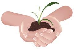 Planta verde en manos Fotos de archivo