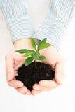 Planta verde en manos Imagenes de archivo