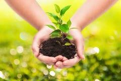 Planta verde en manos de un niño Imagen de archivo libre de regalías