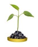 Planta verde en moneda de oro Fotos de archivo