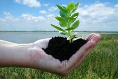Planta verde en palma-vida del `s de la mujer Imagen de archivo libre de regalías