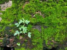 Planta verde en pared imagen de archivo