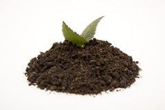 Planta verde en suelo Imagen de archivo