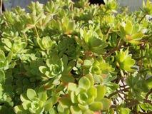 Planta verde en tinas Foto de archivo