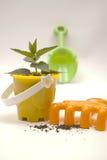 Planta verde en un crisol Imagen de archivo libre de regalías