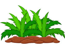 Planta verde en un fondo blanco Imagen de archivo libre de regalías