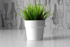 Planta verde en un pote blanco Fotos de archivo
