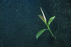 Planta verde en una corteza de árbol Imágenes de archivo libres de regalías