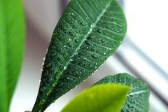 Planta verde en una ventana Foto de archivo libre de regalías