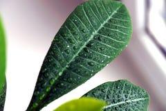 Planta verde en una ventana Imagen de archivo libre de regalías