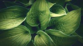 A planta verde folheia close up do detalhe Imagens de Stock Royalty Free