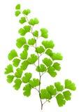 Planta verde fresca imagem de stock
