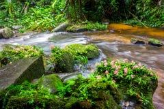 Planta verde fresca y flor rosada en roca en Mun Dang Wat medio Fotos de archivo libres de regalías