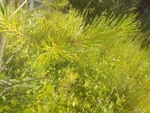 Planta verde hermosa Fotografía de archivo libre de regalías