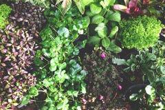 Planta verde hermosa Imagen de archivo libre de regalías