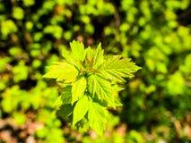 Planta verde hermosa Imagen de archivo