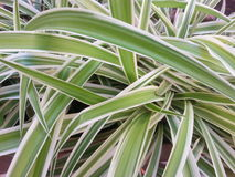Planta verde ida selvagem Imagens de Stock Royalty Free
