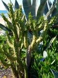 Planta verde interesante del cactus con la arena y el océano 4k Fotos de archivo