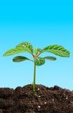 Planta verde joven. imagenes de archivo