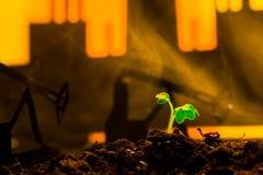 Planta verde joven en suelo en la máquina oscilante del aceite del fondo imágenes de archivo libres de regalías