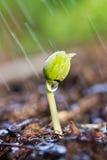 Planta verde joven que crece fuera de suelo Imágenes de archivo libres de regalías