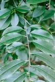 Planta verde Las hojas texturizan y fondo Concepto de la naturaleza Fotografía de archivo libre de regalías